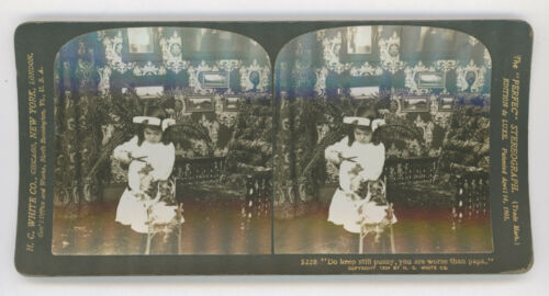 1904 GIRL CUTTING CAT'S HAIR IN ORNATE ROOM, H. C. WHITE STEREOVIEW PHOTO