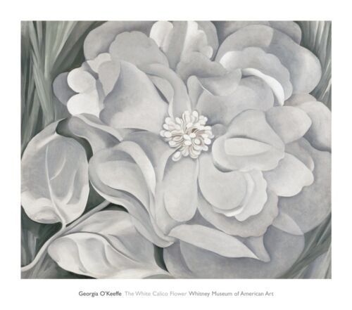 The White Calico Flower 1931 by Georgia O'Keeffe Art Print Floral Poster 29x34