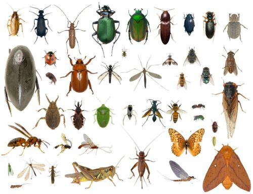 35+ Dead Bugs Entomology Class Insect Bug Collection Identified! Usa In Alcohol