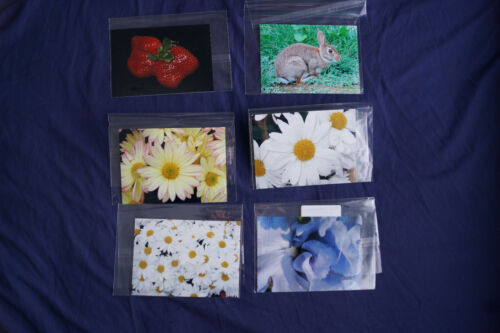 Lot of 6 Original PRINTS size 5 x 7 INCHES - Clearance! Nature flowers bunny mum