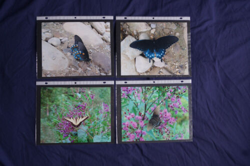 Lot of 4 Original PRINTS size 8x10 INCH Clearance! Butterflies blue black yellow