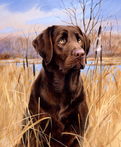 Labrador retriever Oil painting Giclee Printed on canvas L2050