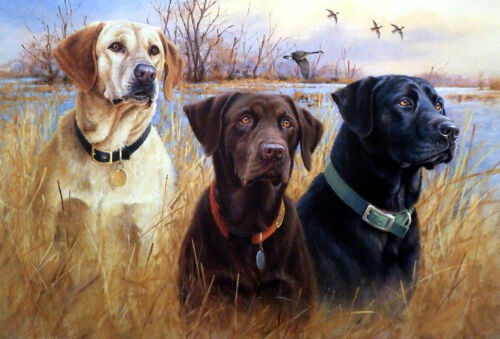Three Labrador retriever Oil painting Giclee Art Printed on canvas L2053