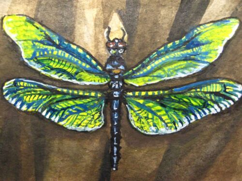 Watercolor Painting Dragonfly Fly Insect Nature ACEO Art