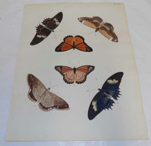 1775 Antique BUTTERFLY Print, Hand-Colored/SIX ILLUSTRATIONS (G)/Peter Cramer