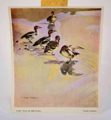 FREE SHIP Vintage Vernon Ward Teal On The Flats Duck Print Printed in England
