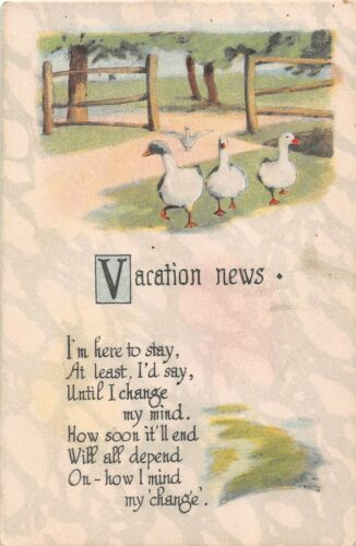 White Geese or Ducks in Yard on Old Vacation News Postcard - C.S. 514