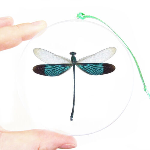 REAL GREEN DRAGONFLY DAMSELFLY CHRISTMAS ORNAMENT BALL GLOBE ROUND GIFT