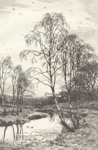 Birch Trees by Frederick Slocombe 1800s vintage old Etching Antique Print