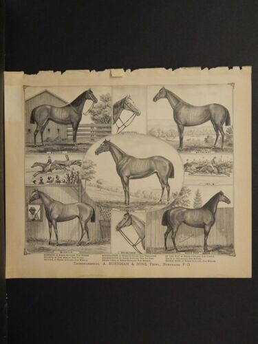 Ohio, Portage County Map, 1874, Thoroughbreds Engravings, J1#54