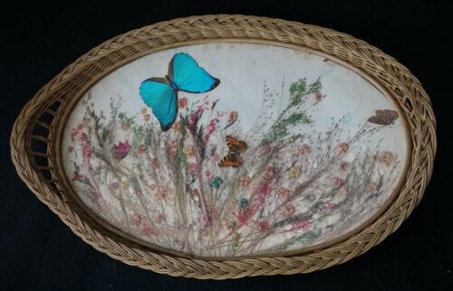OUTSTANDING ANTIQUE WICKER & GLASS PRESSED BLUE BUTTERFLY & DRIED FLOWERS TRAY