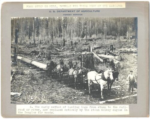 USDA Forest Service Photo Early Method of Hauling Logs w/ Horses c1920-40s