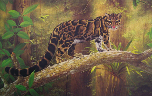 Jungle clouded leopard on a branch painting art print New Rare