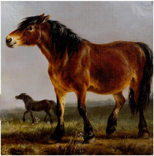 """high quality oil painting 100% handpainted on canvas """" A horse"""""""