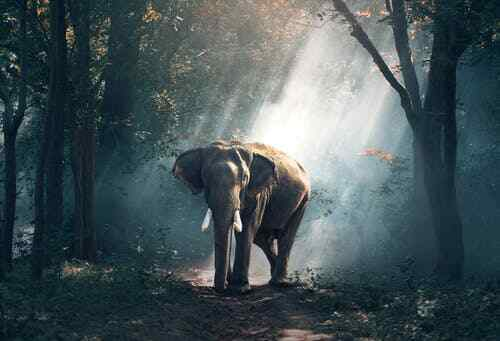 """high quality oil painting handpainted on canvas """"a elephant in the forest"""""""