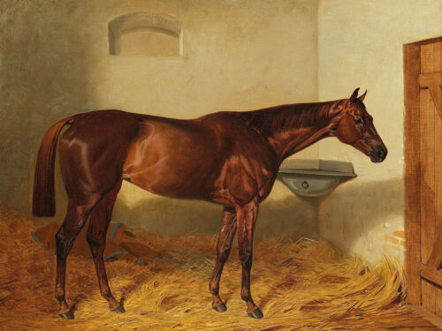 """high quality oil painting 100% handpainted on canvas """" a horse """""""