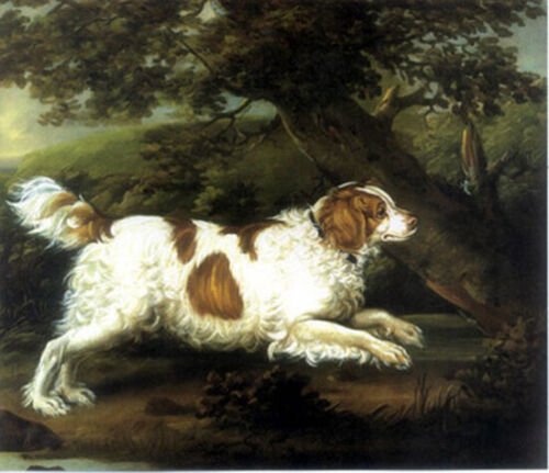 """high quality oil painting 100% handpainted on canvas """" a dog"""""""