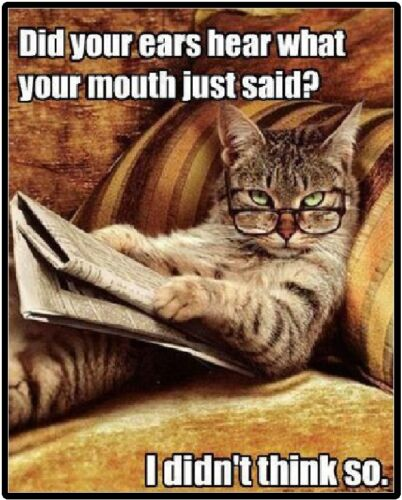 Cat Humor Did You Ears Hear What Your Mouth Just Said Refrigerator Magnet