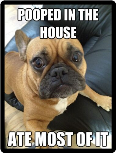 Funny Dog Humor French Bulldog Pooped In The House Refrigerator Magnet